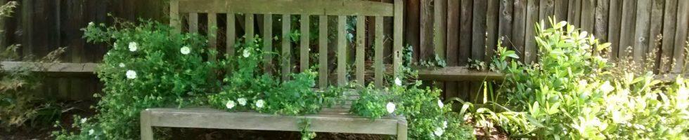 garden-bench, dog-grooming,