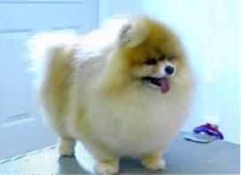 dog-2, grooming,