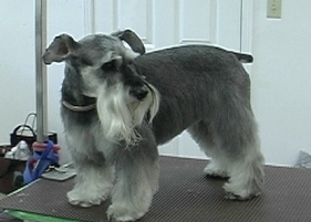 dog grooming service, pet salon,