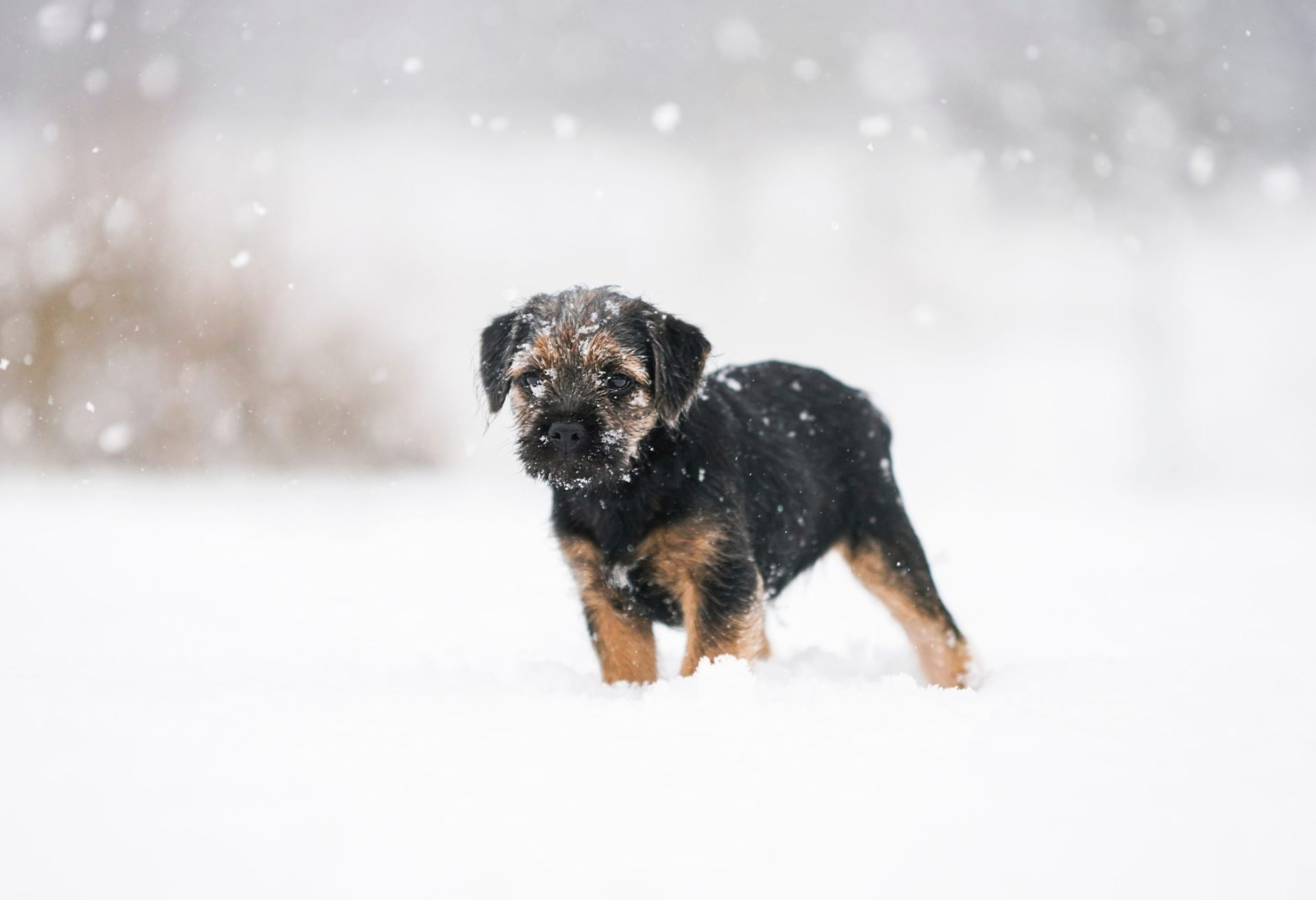 winter-dog-grooming