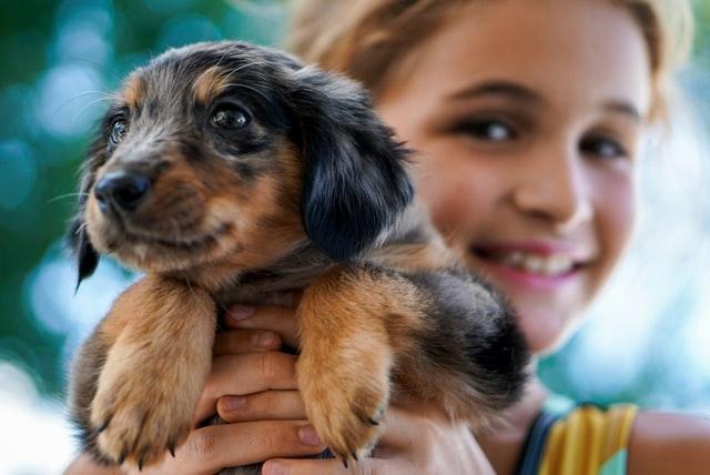 puppy-grooming-pet-grooming-studio