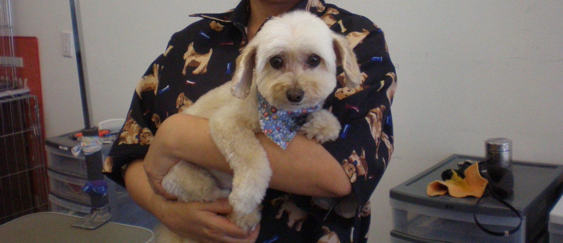 pet grooming studio, dog and groomer
