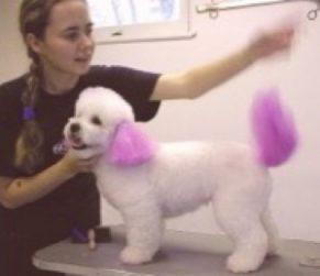 pet colouring, Richmond Hill dog groomer,