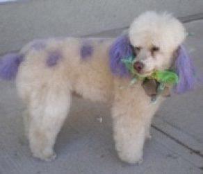 dog colouring, Toni