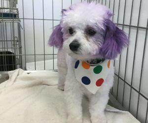 dog colouring, pet grooming studio