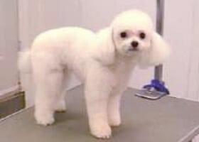 dog grooming, pet grooming studio,