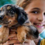 puppy grooming, pet grooming studio