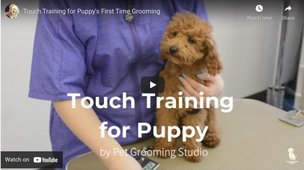 Touch Training, Puppies,